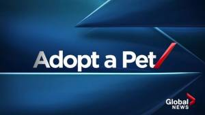 Adopt a Pet Dec 11