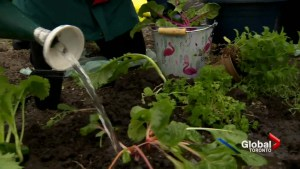 Grow your own veggies on City of Toronto property