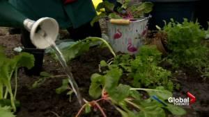 Grow your own veggies on City of Toronto property