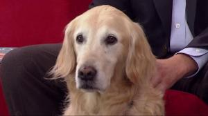 Poppy – The Therapy Dog