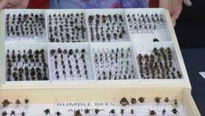 Volunteers needed for provincial bee count