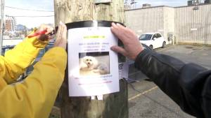 Dog owners warned after spike in thefts