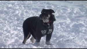 Public Health says if it's too cold for you, it's too cold for your pets too