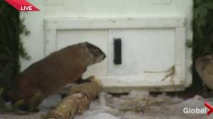 Shubenacadie Sam makes his prediction