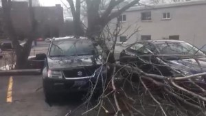 Residents in Kingston and surrounding areas assess the damage from the wind storm