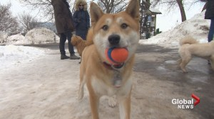 Outremont dog park to close in 10 years