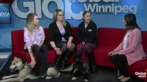 Adopt a Pal: Manitoba Mutts to host annual fundraiser April 28