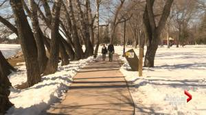 COVID-19: Ipsos poll finds many pandemic-weary Canadians turning to nature for relief (01:33)