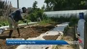 """Play video: """"Urban farming supports the fight against climate change"""": Etobicoke backyard farm joins growing trend in GTA"""