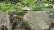 Play video: Backyard Oasis: Toronto shade garden offers peace and tranquility