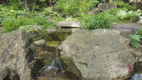 Backyard Oasis: Toronto shade garden offers peace and tranquility | Watch News Videos Online