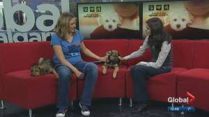 Cochrane & Area Humane Society Pet of the Month: Cocoa and Bailey