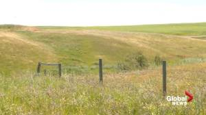 Hot weather helping crops along, but some areas of Alberta are still facing a disaster