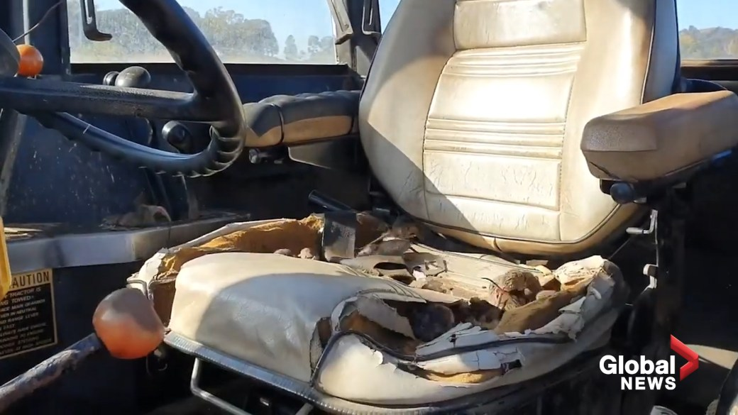 Click to play video: 'Rodent plague wreaks havoc across New South Wales'