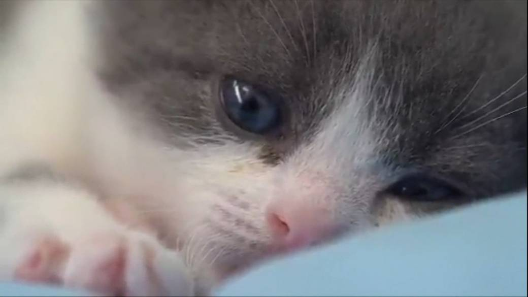 Click to play video: 'Chinese biotech firm releases video of cloned kitten'