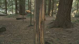 North Shore trees vandalized