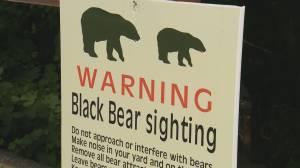 Bear scare closes Metro Vancouver park