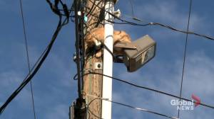 Calgary firefighters attempt to rescue cat from power pole