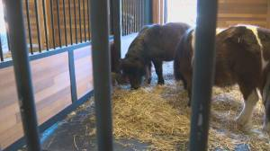 Edmonton Valley Zoo initiative aims to educate people about where their food comes from