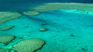 Great Barrier Reef outlook downgraded to 'very poor'
