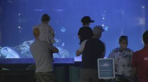 Vancouver Aquarium sold to U.S.-based attractions and tourism operator (01:44)