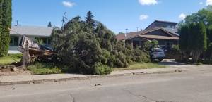 Strong winds leave parts of Saskatoon without power