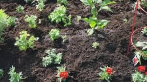 GardenWorks: Warm weather veggies
