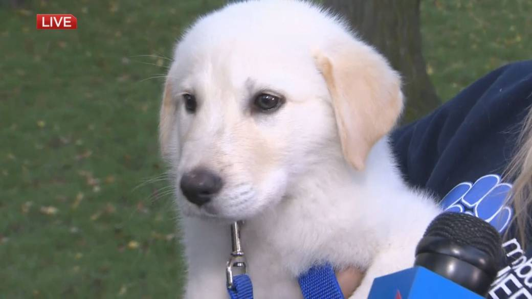Adopt A Pal Puppy Playing In The Park Kicks Off The Fall