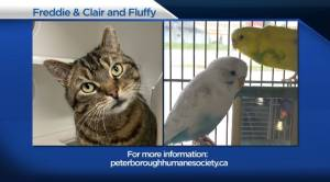 Global Peterborough's Shelter Pet Project for April 23, 2021 (02:37)