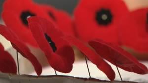 Lethbridge Legion launches poppy campaign online (01:53)