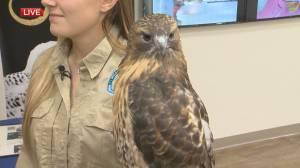 The education program at the Wildlife Haven Rehabilitation centre