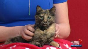 Calgary Animal Services Pet of the Week: Clarice