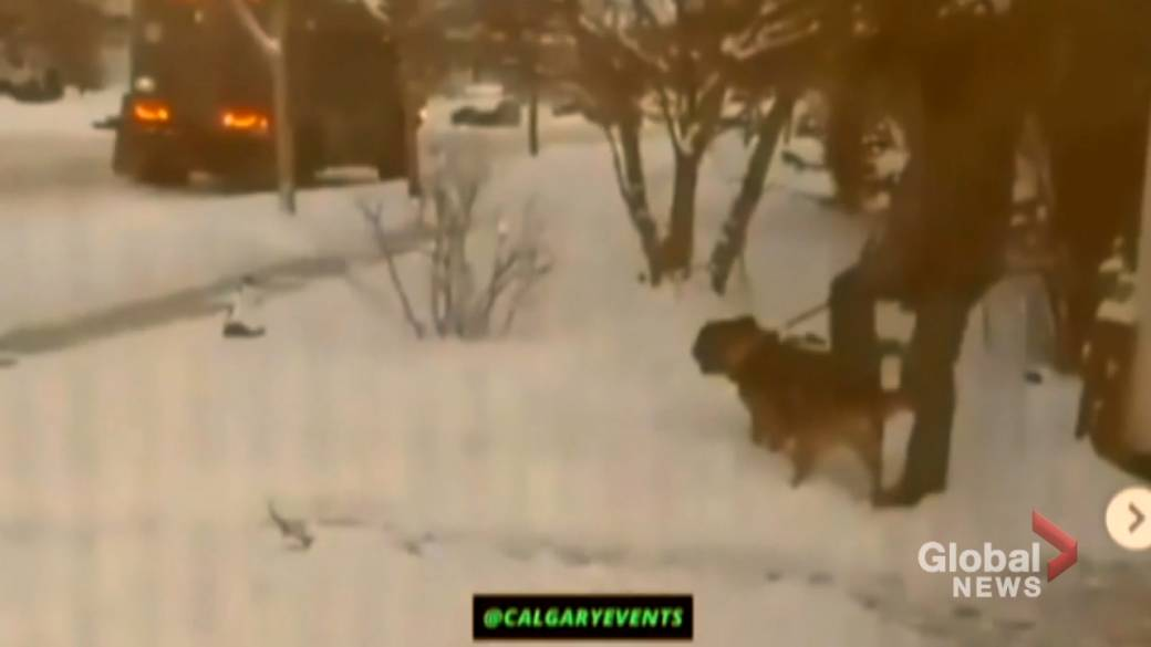 Click to play video 'Calgary police 'very sorry' after officer caught kicking service dog'