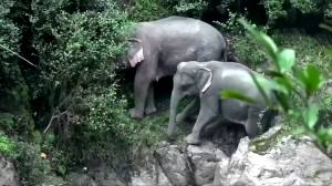 Six elephants die after falling into Thai waterfall