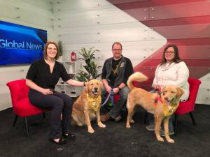 Cuteness overload: Golden retriever rescue dogs visit Global Peterborough set