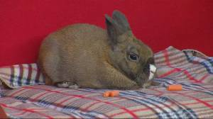 Saskatoon SPCA looking to find a home for Cola