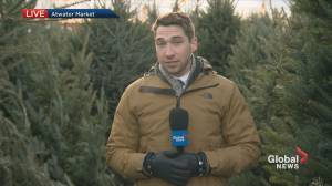 Christmas tree prices soar