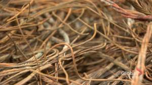 Copper wire thefts pose fatal risk in New Brunswick