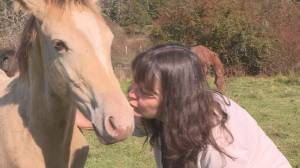 Vancouver Island horse rescue facility shutting down