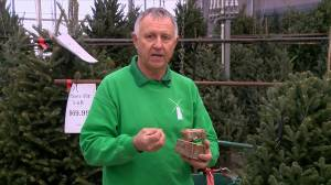 Proper Christmas tree care from Dutch Growers in Saskatoon