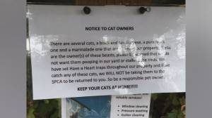 Cats threatened in North Saanich neighbourhood (01:50)