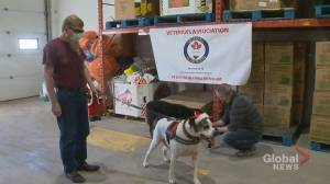 New holiday season campaign brings 'very important' support for military veterans' pets in Calgary (01:49)