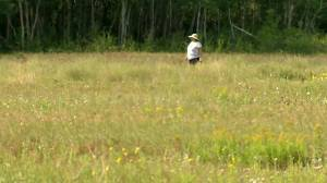 Keep walking: Manitoba spending nearly $900K to improve trails (00:34)