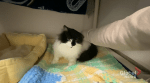 Edmonton Humane Society: Dandy the cat
