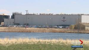 Coronavirus outbreak declared at Alberta's Harmony Beef plant