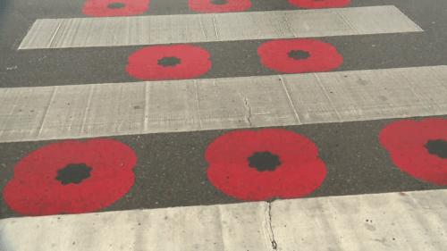 Royal Canadian Legion looks for alternatives after Chestermere's poppy crosswalk deemed 'disrespectful'   Watch News Videos Online