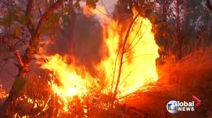 What is causing the Amazon rainforest wildfires?