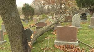 Wind Topples over a dozen trees in the Cataraqui Cemetery