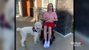 Calgary man with service dog says he was harassed by Walmart staff