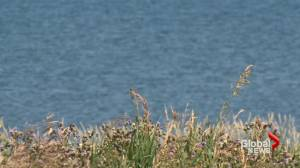 Drowning in Stafford Lake prompts strong water safety reminder